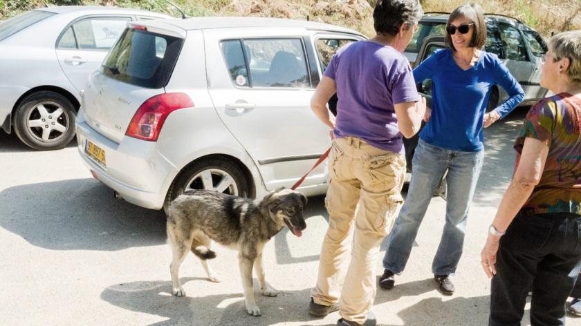 Juttah the dog and friends at Kfar Rut